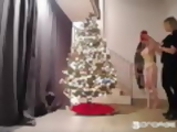 the best way to put up your christmas tree